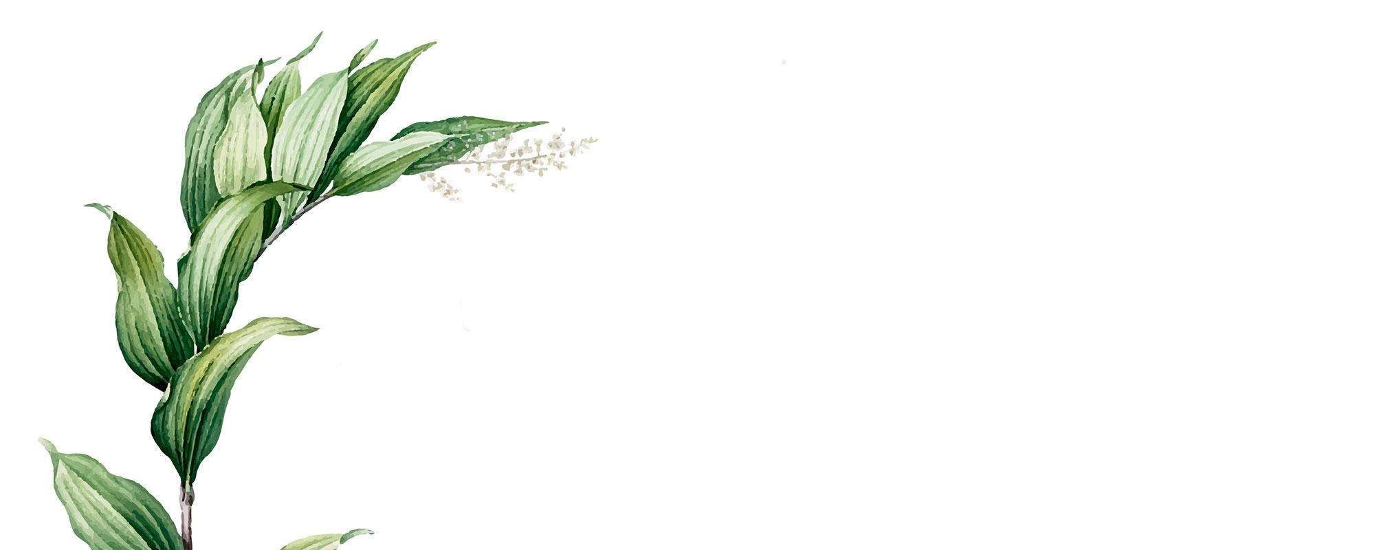 banner-bg-2-6